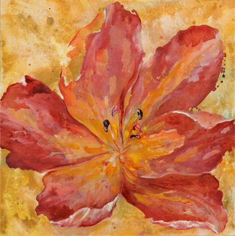 tulipan abierto